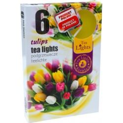 Čajové sviečky - Tulipán - 6 ks - Admit