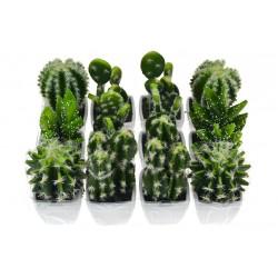 Dekoratívny kaktus - 1 ks - 10-12 cm