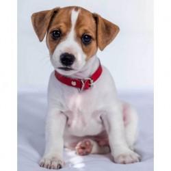 Deka z mikroflanelu - Jack Russel Terrier - 150 x 120 cm - Jerry Fabrics
